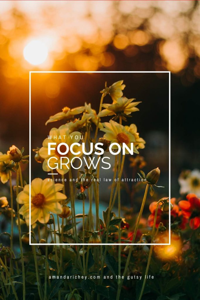 what you focus on grows: the law of attraction
