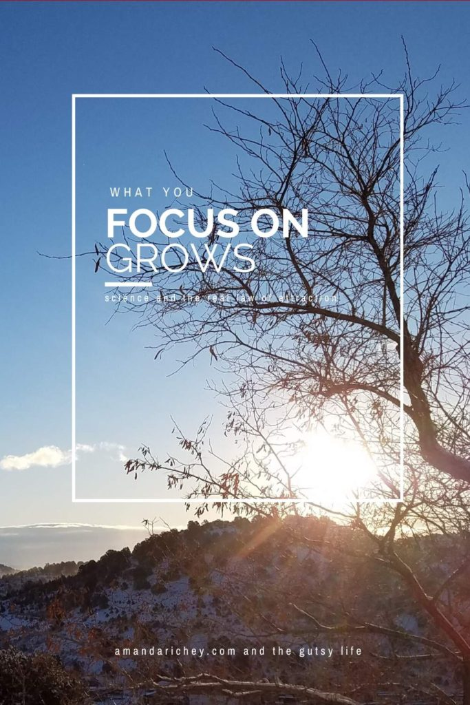 science and the law of attraction: what you focus on grows